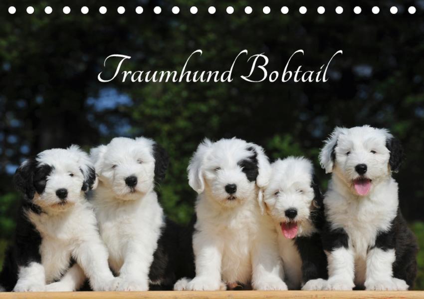 Traumhund Bobtail (Tischkalender 2017 DIN A5 quer) - Coverbild