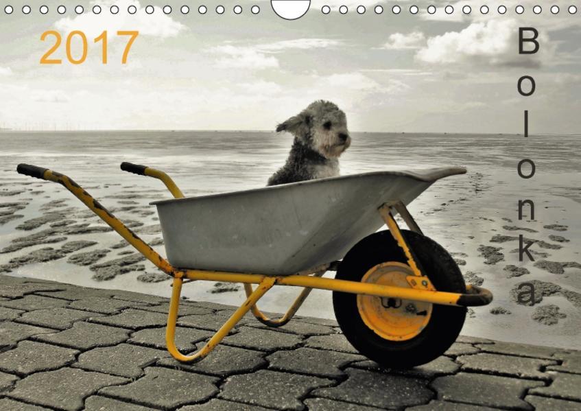 Bolonka 2017 (Wandkalender 2017 DIN A4 quer) - Coverbild