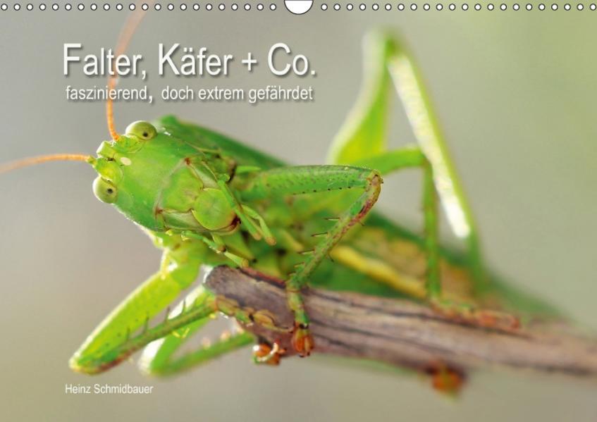 Falter, Käfer und Co.faszinierend, doch extrem gefährdet (Wandkalender 2017 DIN A3 quer) - Coverbild