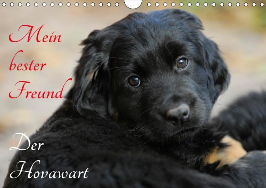 Mein bester Freund - Der Hovawart (Wandkalender 2017 DIN A4 quer) - Coverbild