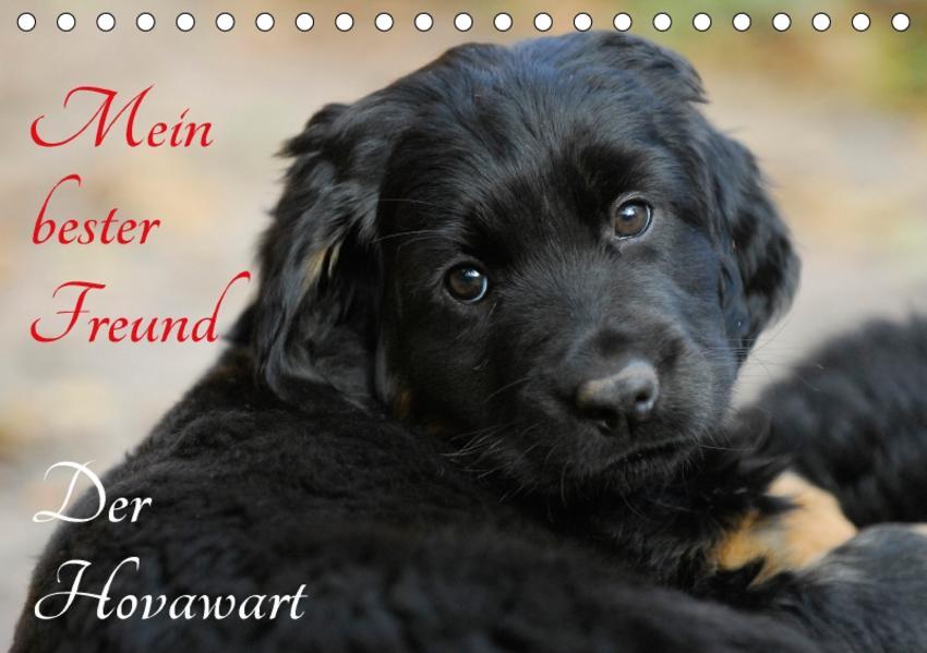 Mein bester Freund - Der Hovawart (Tischkalender 2017 DIN A5 quer) - Coverbild