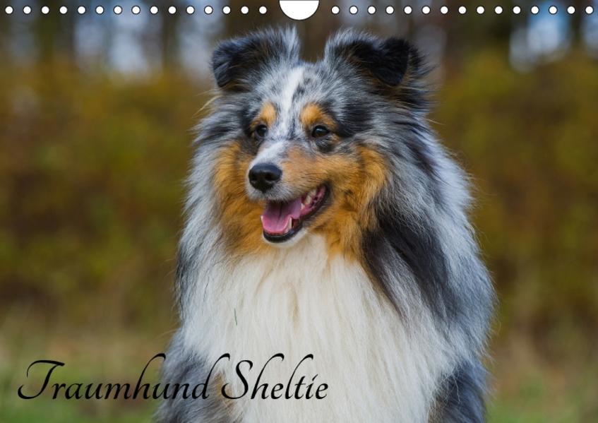 Traumhund Sheltie (Wandkalender 2017 DIN A4 quer) - Coverbild