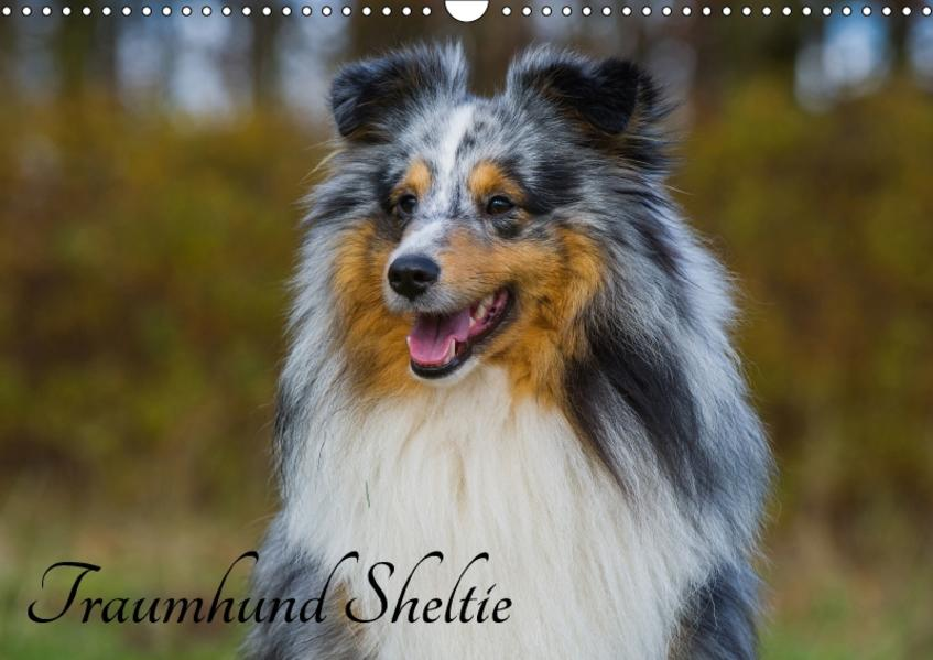 Traumhund Sheltie (Wandkalender 2017 DIN A3 quer) - Coverbild