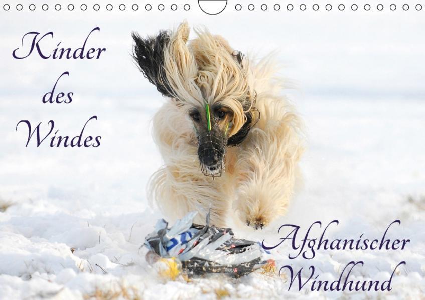 Kinder des Windes - Afghanischer Windhund (Wandkalender 2017 DIN A4 quer) - Coverbild