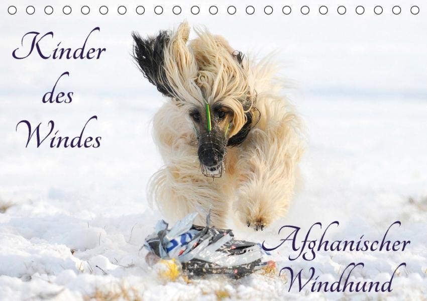 Kinder des Windes - Afghanischer Windhund (Tischkalender 2017 DIN A5 quer) - Coverbild