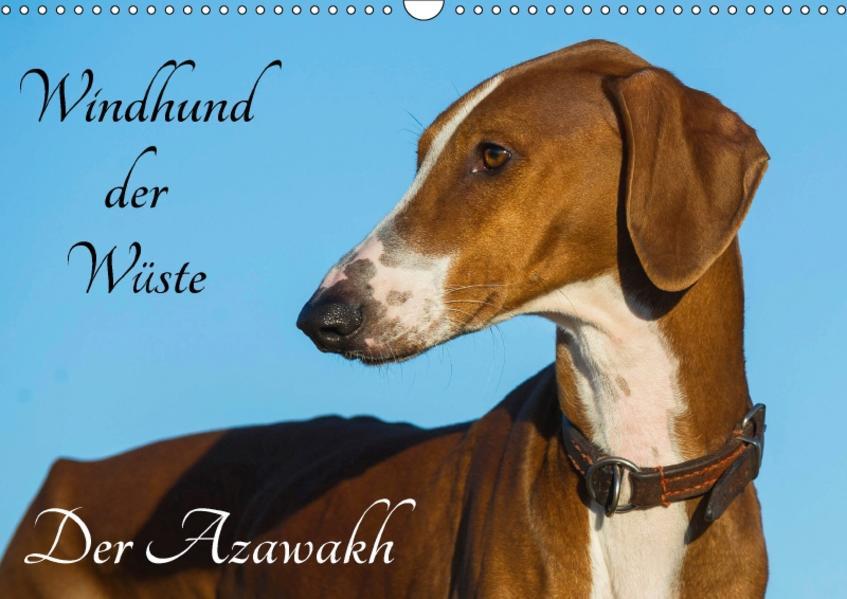 Windhund der Wüste - Der Azawakh (Wandkalender 2017 DIN A3 quer) - Coverbild