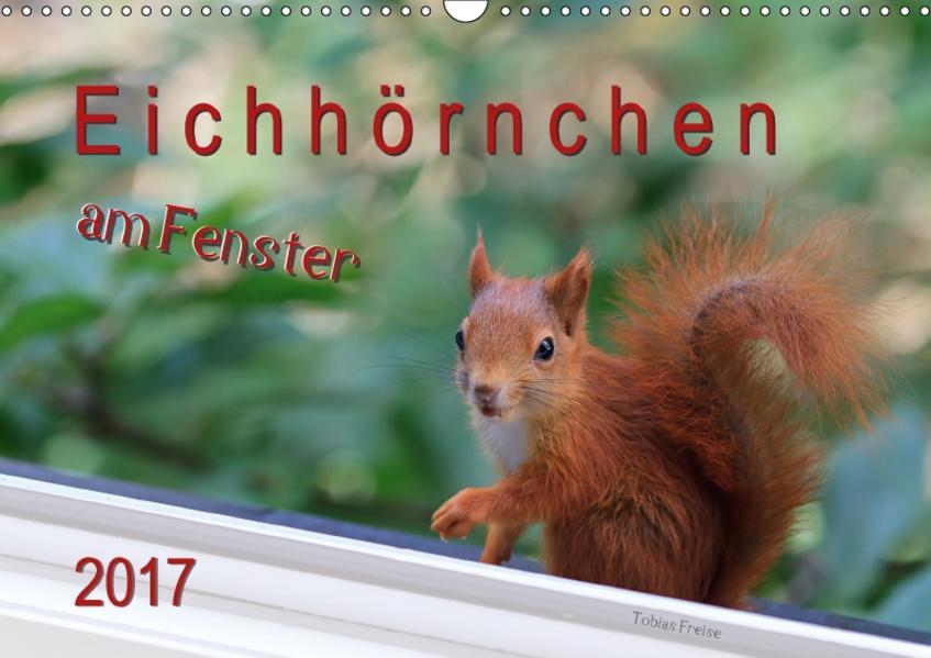 Eichhörnchen am Fenster (Wandkalender 2017 DIN A3 quer) - Coverbild