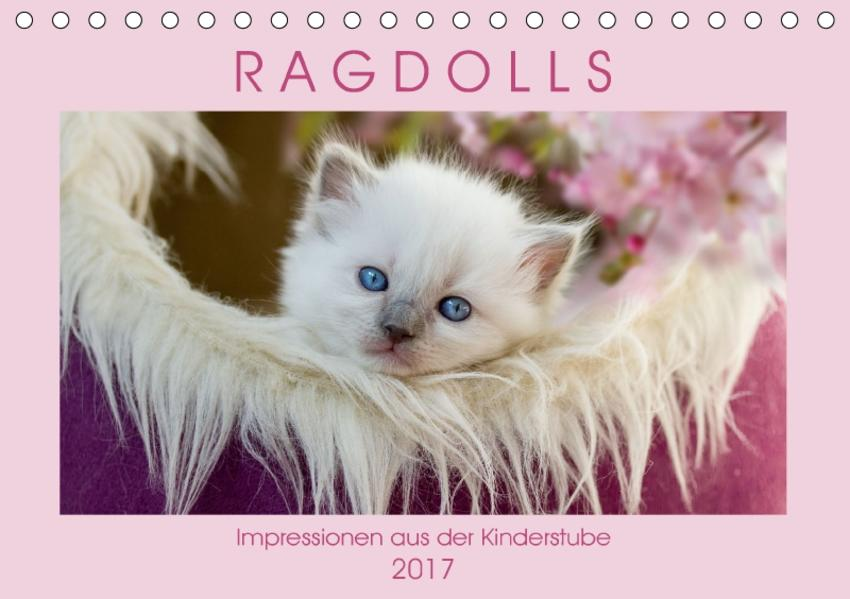 RAGDOLLS Impressionen aus der Kinderstube (Tischkalender 2017 DIN A5 quer) - Coverbild