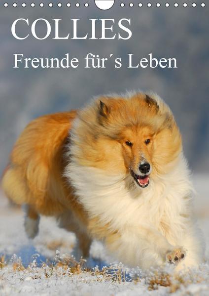 Collies - Freunde für´s Leben (Wandkalender 2017 DIN A4 hoch) - Coverbild