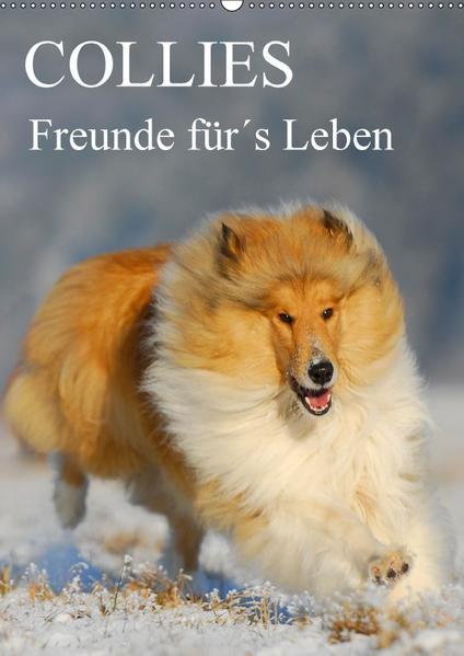 Collies - Freunde für´s Leben (Wandkalender 2017 DIN A2 hoch) - Coverbild