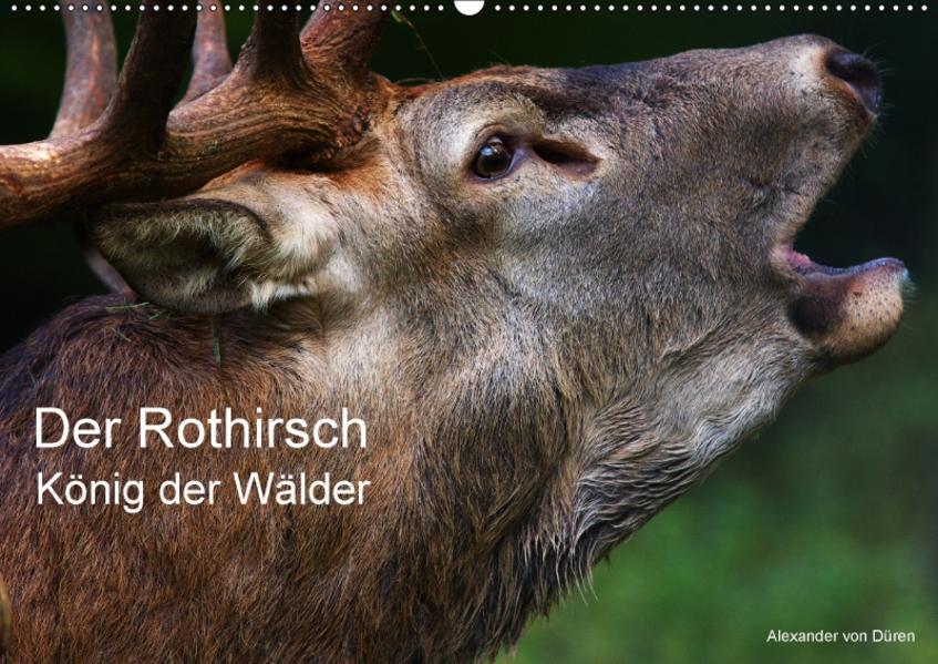 Der Rothirsch, König der Wälder (Wandkalender 2017 DIN A2 quer) - Coverbild