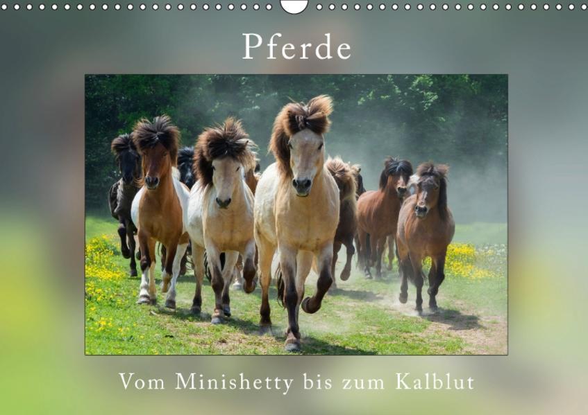 Pferde Vom Minishetty bis zum Kaltblut (Wandkalender 2017 DIN A3 quer) - Coverbild