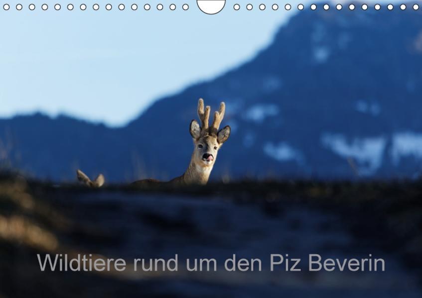 Wildtiere rund um den Piz BeverinCH-Version  (Wandkalender 2017 DIN A4 quer) - Coverbild