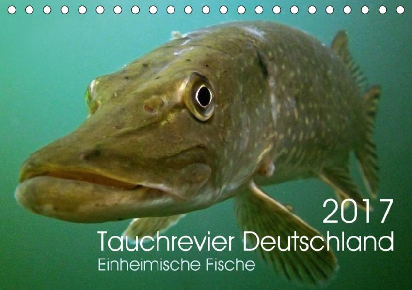 Tauchrevier Deutschland (Tischkalender 2017 DIN A5 quer) - Coverbild