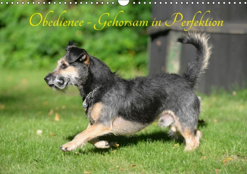 Obedience - Gehorsam in Perfektion (Wandkalender 2017 DIN A3 quer) - Coverbild