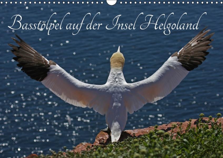 Basstölpel auf der Insel Helgoland (Wandkalender 2017 DIN A3 quer) - Coverbild