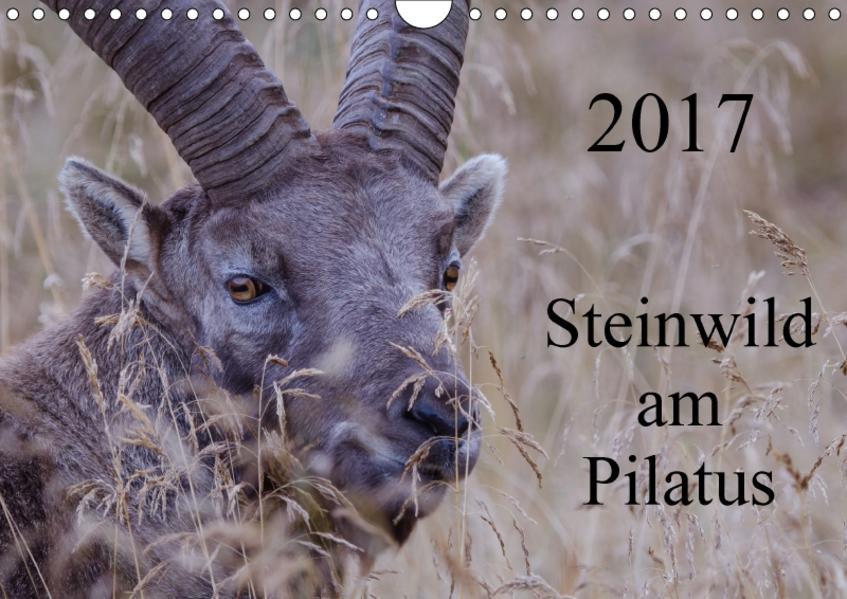 Steinwild am PilatusCH-Version  (Wandkalender 2017 DIN A4 quer) - Coverbild