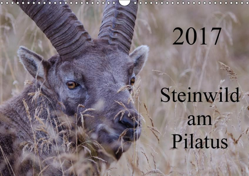 Steinwild am PilatusCH-Version  (Wandkalender 2017 DIN A3 quer) - Coverbild