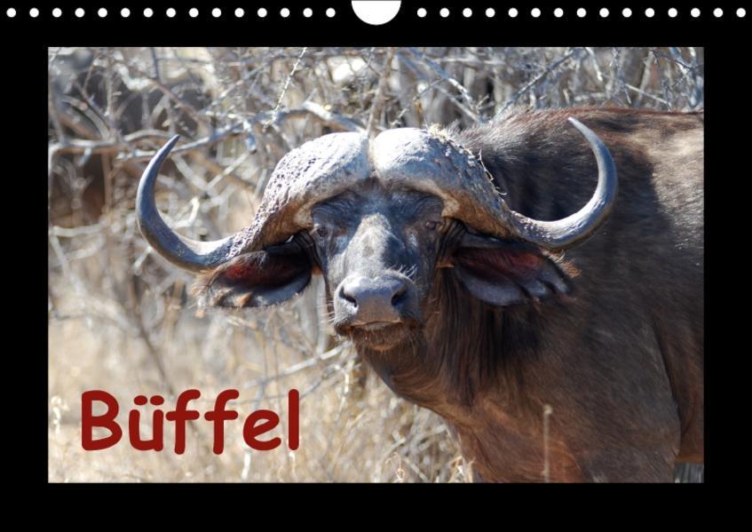 Büffel (Wandkalender 2017 DIN A4 quer) - Coverbild