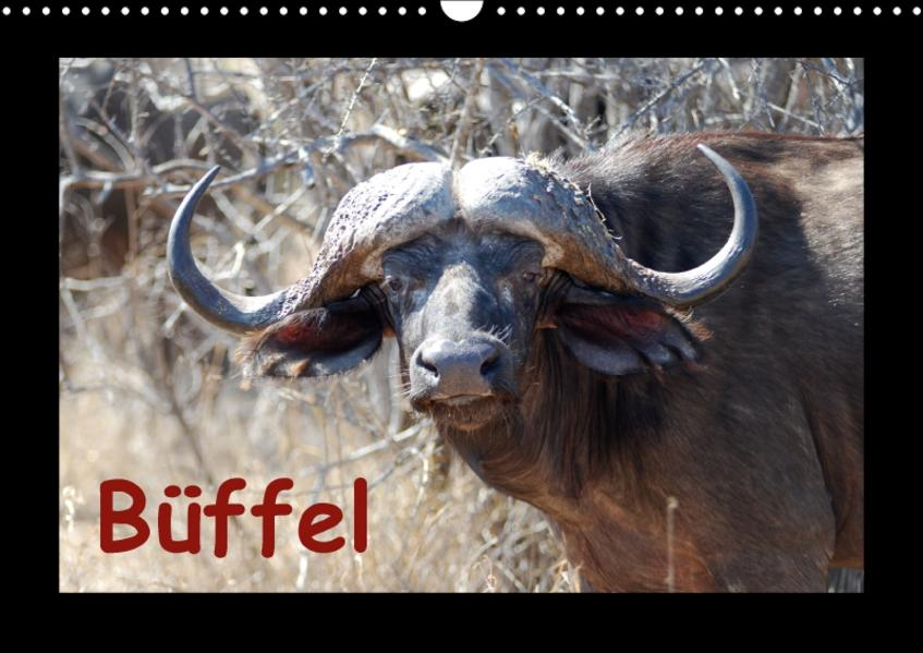 Büffel (Wandkalender 2017 DIN A3 quer) - Coverbild