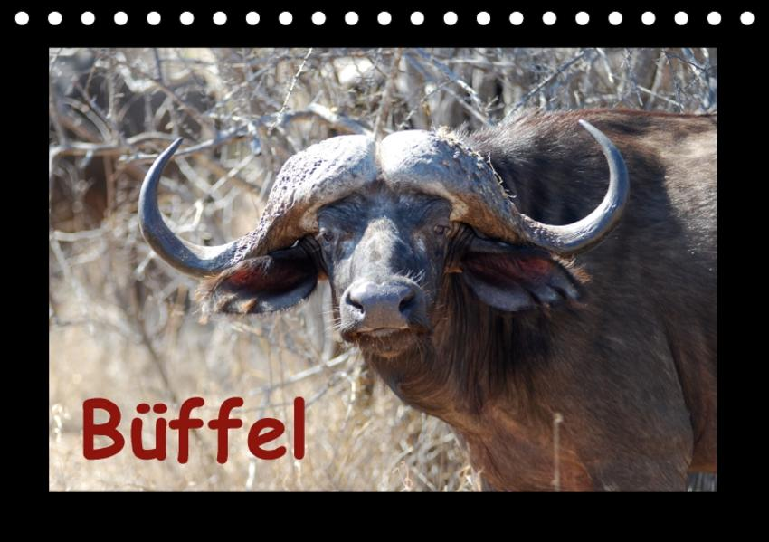 Büffel (Tischkalender 2017 DIN A5 quer) - Coverbild