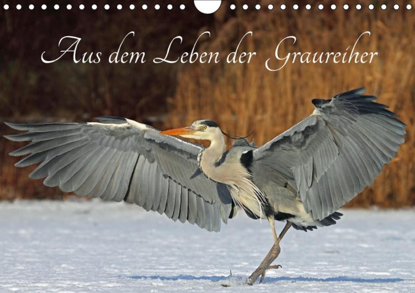 Aus dem Leben der Graureiher (Wandkalender 2017 DIN A4 quer) - Coverbild