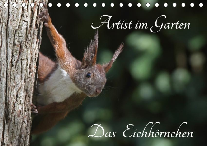 Artist im Garten. Das Eichhörnchen (Tischkalender 2017 DIN A5 quer) - Coverbild