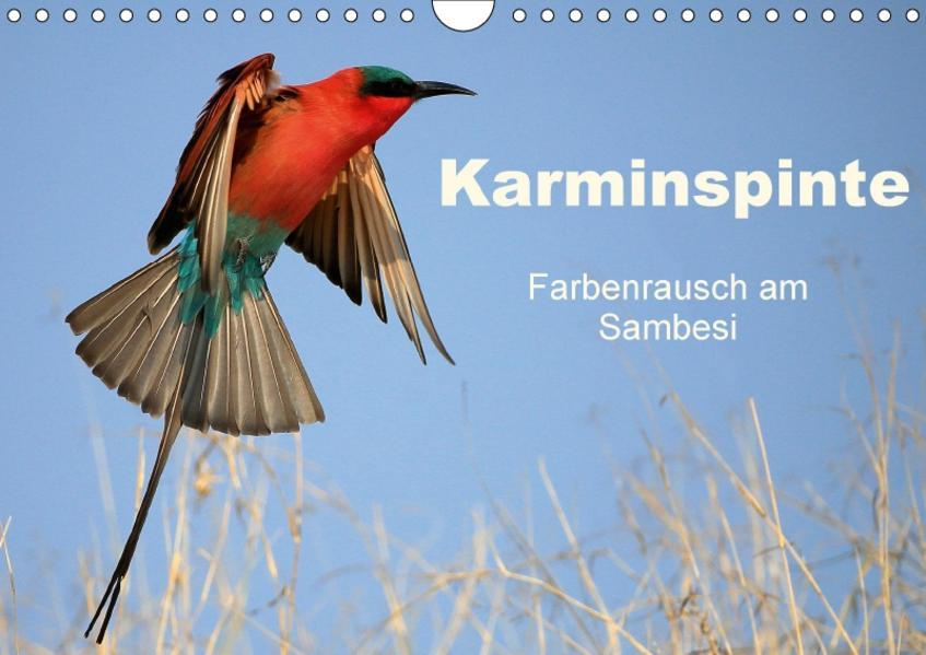 Karminspinte - Farbenrausch am Sambesi (Wandkalender 2017 DIN A4 quer) - Coverbild