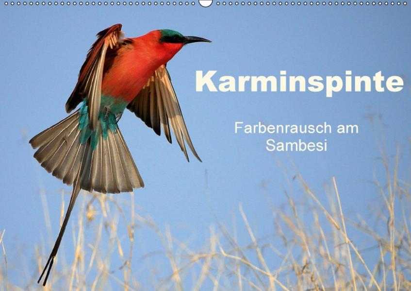 Karminspinte - Farbenrausch am Sambesi (Wandkalender 2017 DIN A2 quer) - Coverbild