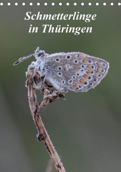 Schmetterlinge in Thüringen (Tischkalender 2017 DIN A5 hoch) - Coverbild