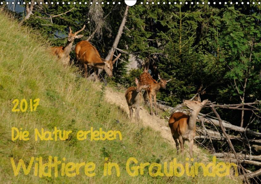 Die Natur erleben - Wildtiere in GraubündenCH-Version  (Wandkalender 2017 DIN A3 quer) - Coverbild