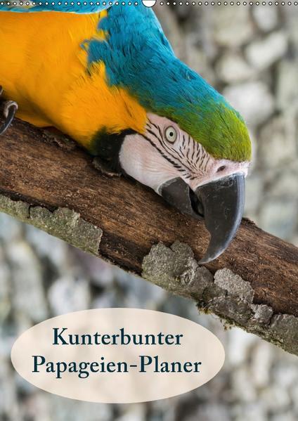 Kunterbunter Papageien-Planer (Wandkalender 2017 DIN A2 hoch) - Coverbild