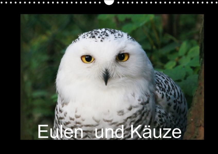 Eulen und Käuze (Wandkalender 2017 DIN A3 quer) - Coverbild