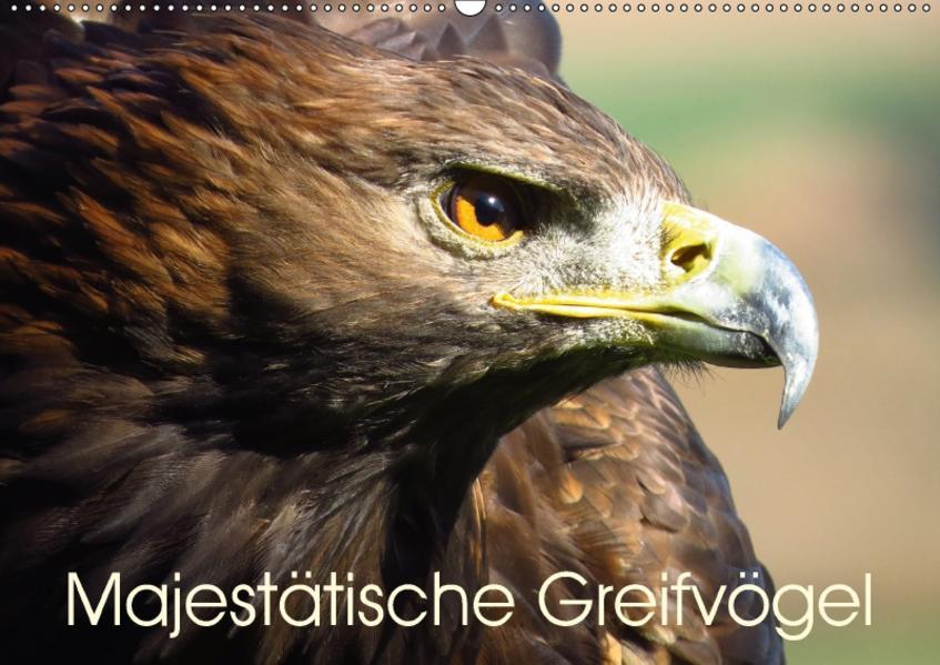 Majestätische Greifvögel (Wandkalender 2017 DIN A2 quer) - Coverbild
