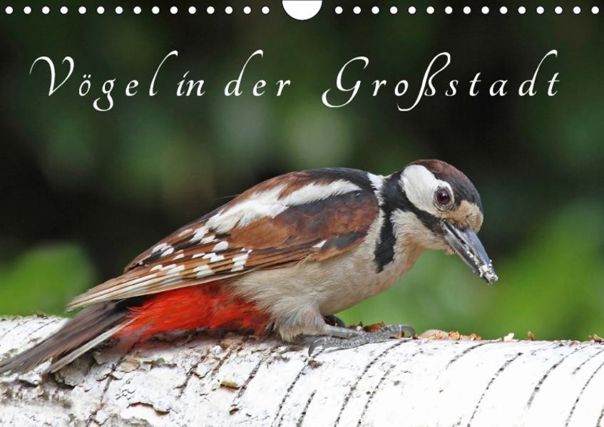 Vögel in der Großstadt (Wandkalender 2017 DIN A4 quer) - Coverbild