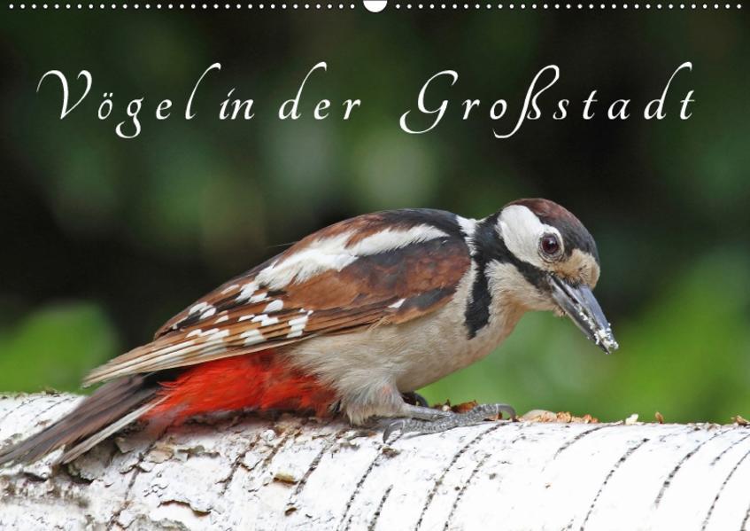 Vögel in der Großstadt (Wandkalender 2017 DIN A2 quer) - Coverbild