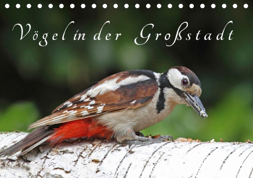 Vögel in der Großstadt (Tischkalender 2017 DIN A5 quer) - Coverbild