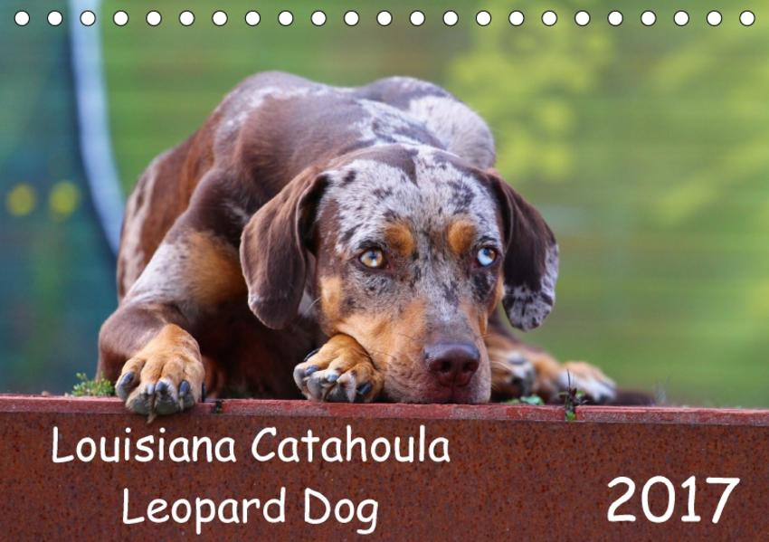 Louisiana Catahoula Leopard Dog (Tischkalender 2017 DIN A5 quer) - Coverbild