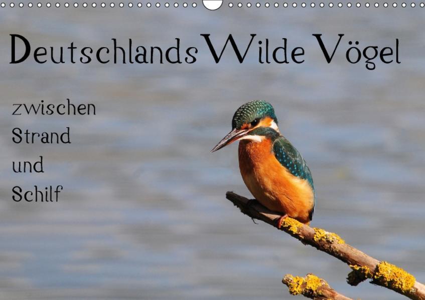 Deutschlands wilde Vögel zwischen Strand und Schilf (Wandkalender 2017 DIN A3 quer) - Coverbild