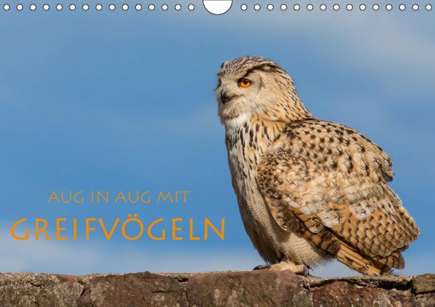 Aug in Aug mit Greifvögeln (Wandkalender 2017 DIN A4 quer) - Coverbild