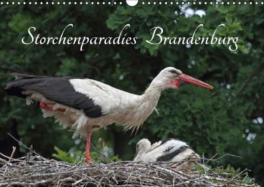 Storchenparadies Brandenburg (Wandkalender 2017 DIN A3 quer) - Coverbild