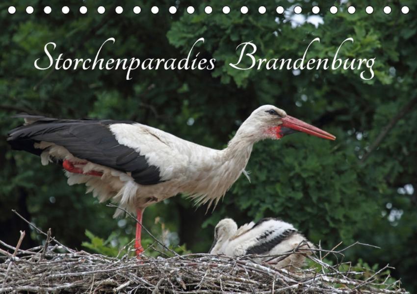 Storchenparadies Brandenburg (Tischkalender 2017 DIN A5 quer) - Coverbild