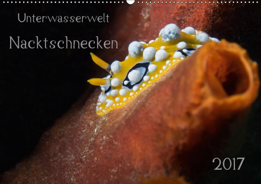 Unterwasserwelt Nacktschnecken (Wandkalender 2017 DIN A2 quer) - Coverbild