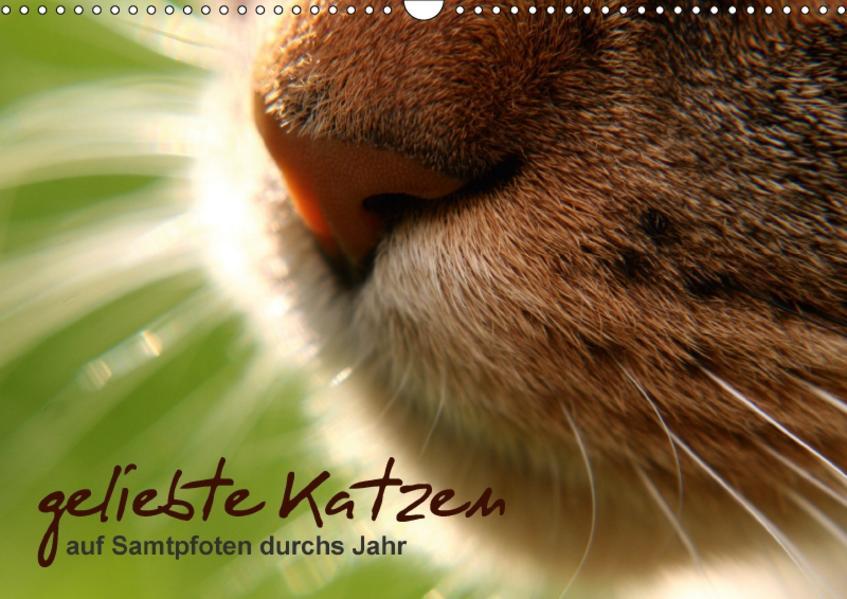 geliebte Katzen - auf Samtpfoten durchs Jahr (Wandkalender 2017 DIN A3 quer) - Coverbild