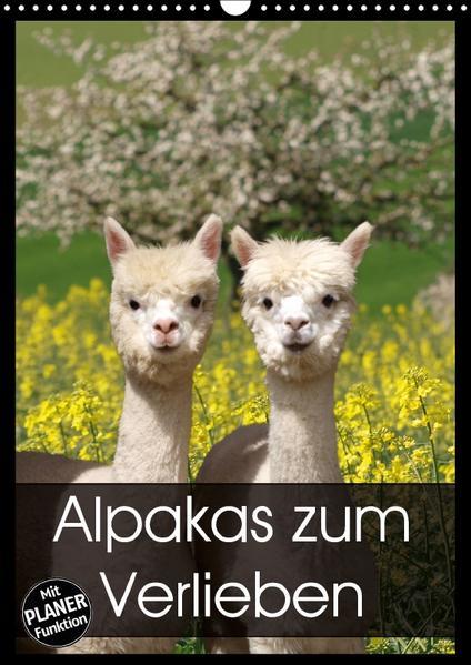 Alpakas zum Verlieben (Wandkalender 2017 DIN A3 hoch) - Coverbild