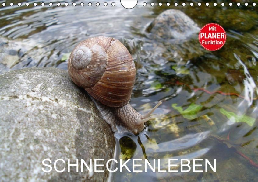 Schneckenleben (Wandkalender 2017 DIN A4 quer) - Coverbild