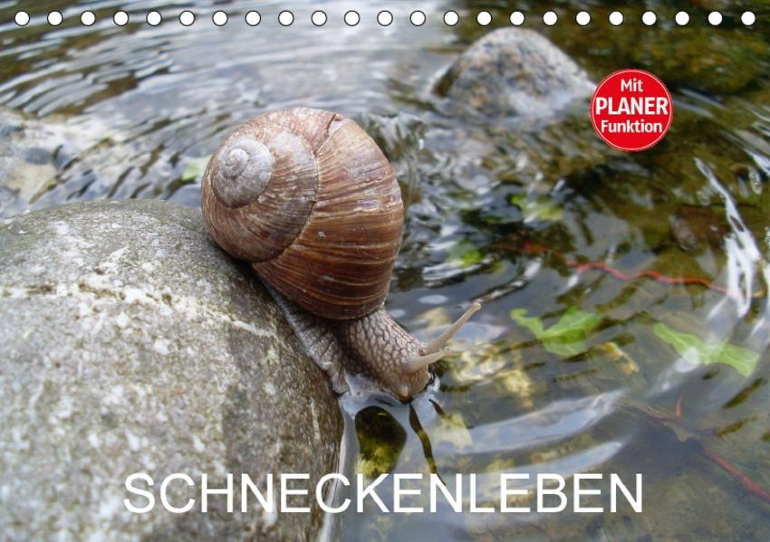 Schneckenleben (Tischkalender 2017 DIN A5 quer) - Coverbild