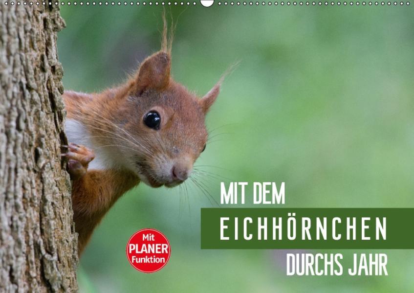 Mit dem Eichhörnchen durchs Jahr (Wandkalender 2017 DIN A2 quer) - Coverbild
