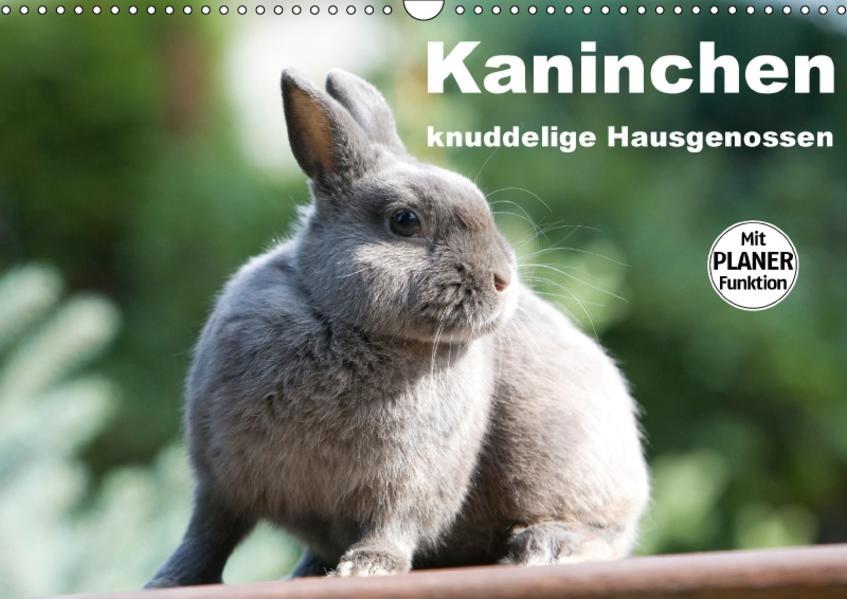 Kaninchen - knuddelige Hausgenossen (Wandkalender 2017 DIN A3 quer) - Coverbild