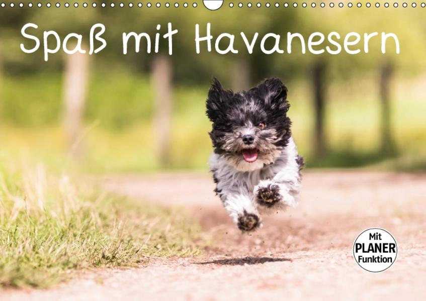 Spaß mit Havanesern (Wandkalender 2017 DIN A3 quer) - Coverbild